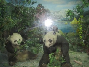 Stuffed Panda at Chengdu Research and Breeding Centre